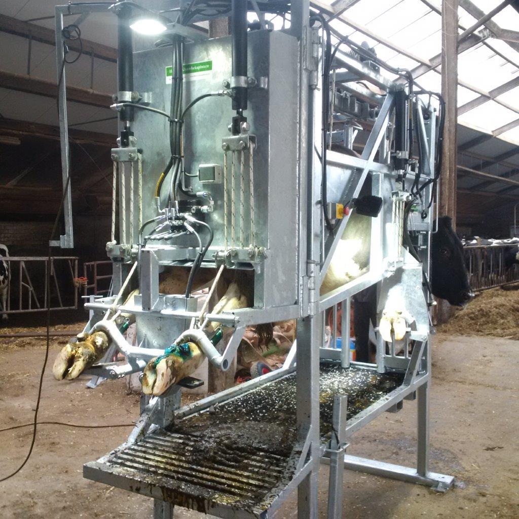 Verwegen klauwbekapbox koe